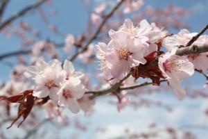 青空に映える春の色