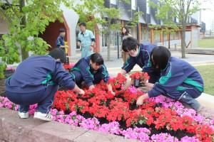 インパチェスの苗約160本を植樹